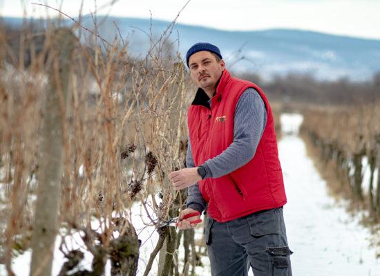 vinohrady vladár vína